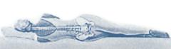 Оптимальный матрас; lineaflex; lineaflex Кишинев;